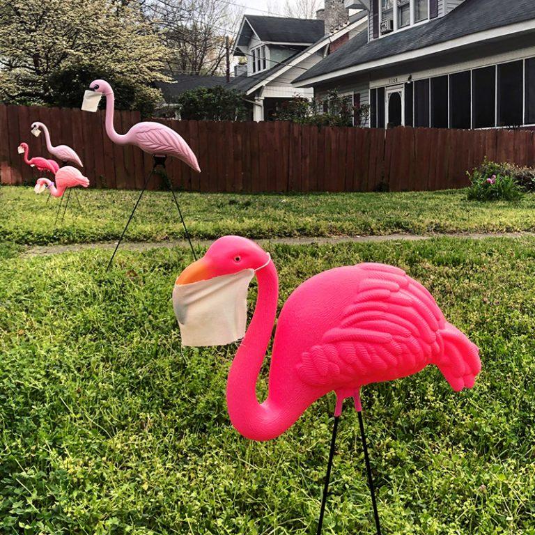 Covid Flamingos